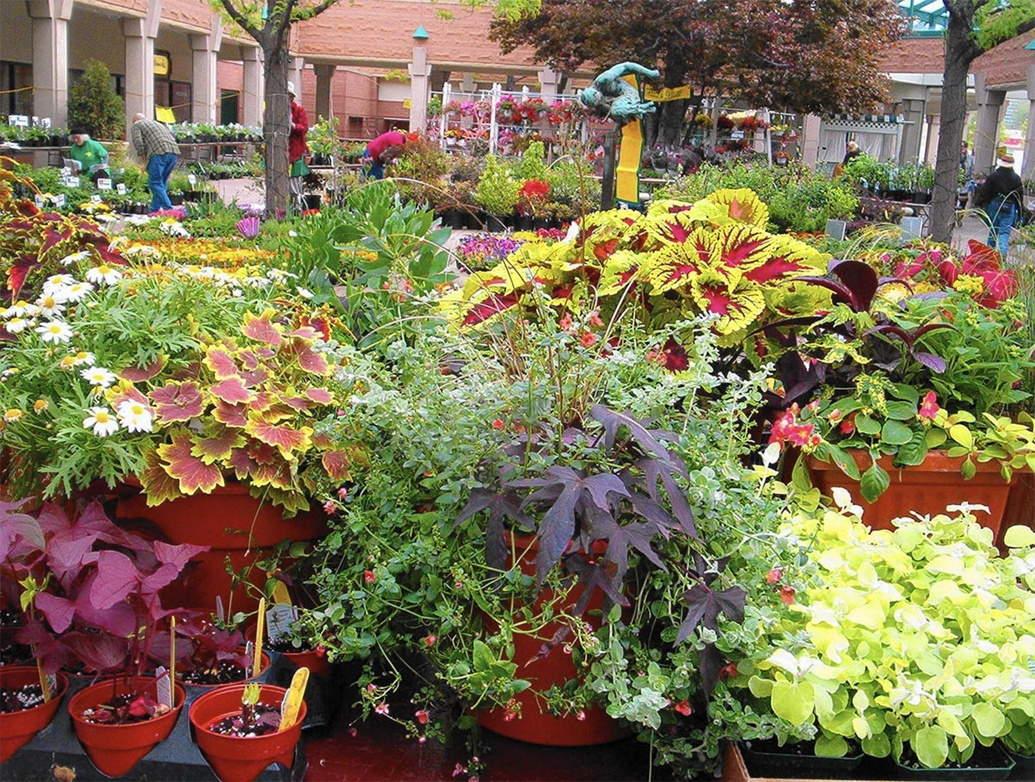 Plant sale savvy experts share shopping tips for Savvy home and garden