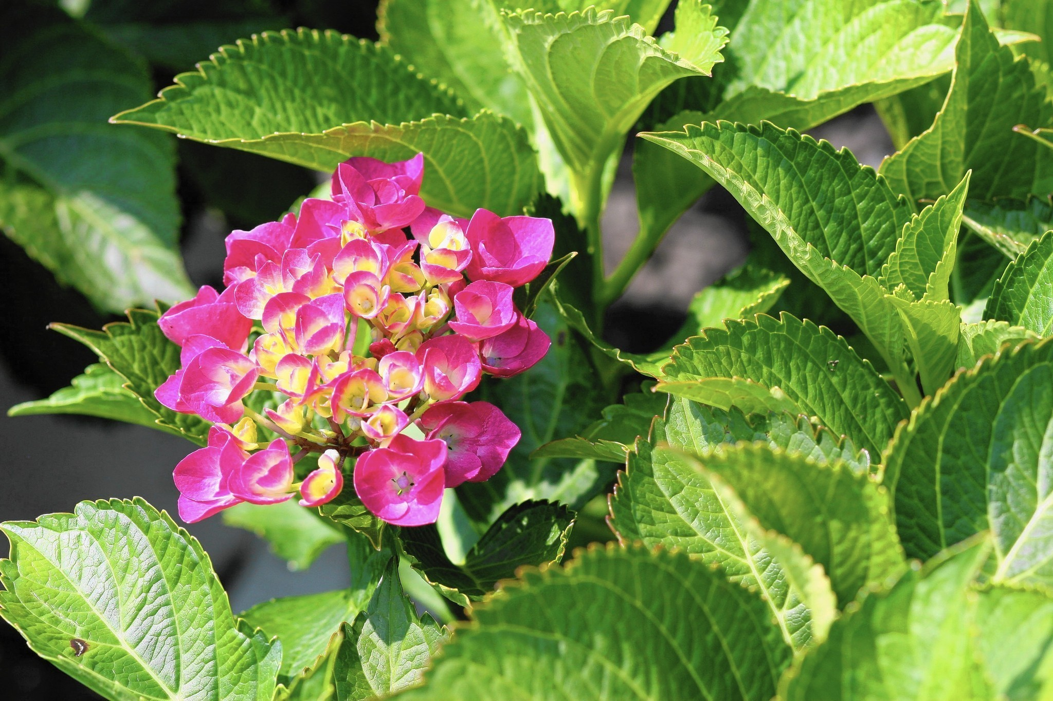 Gardening mistakes and how to avoid them this spring hartford courant mightylinksfo