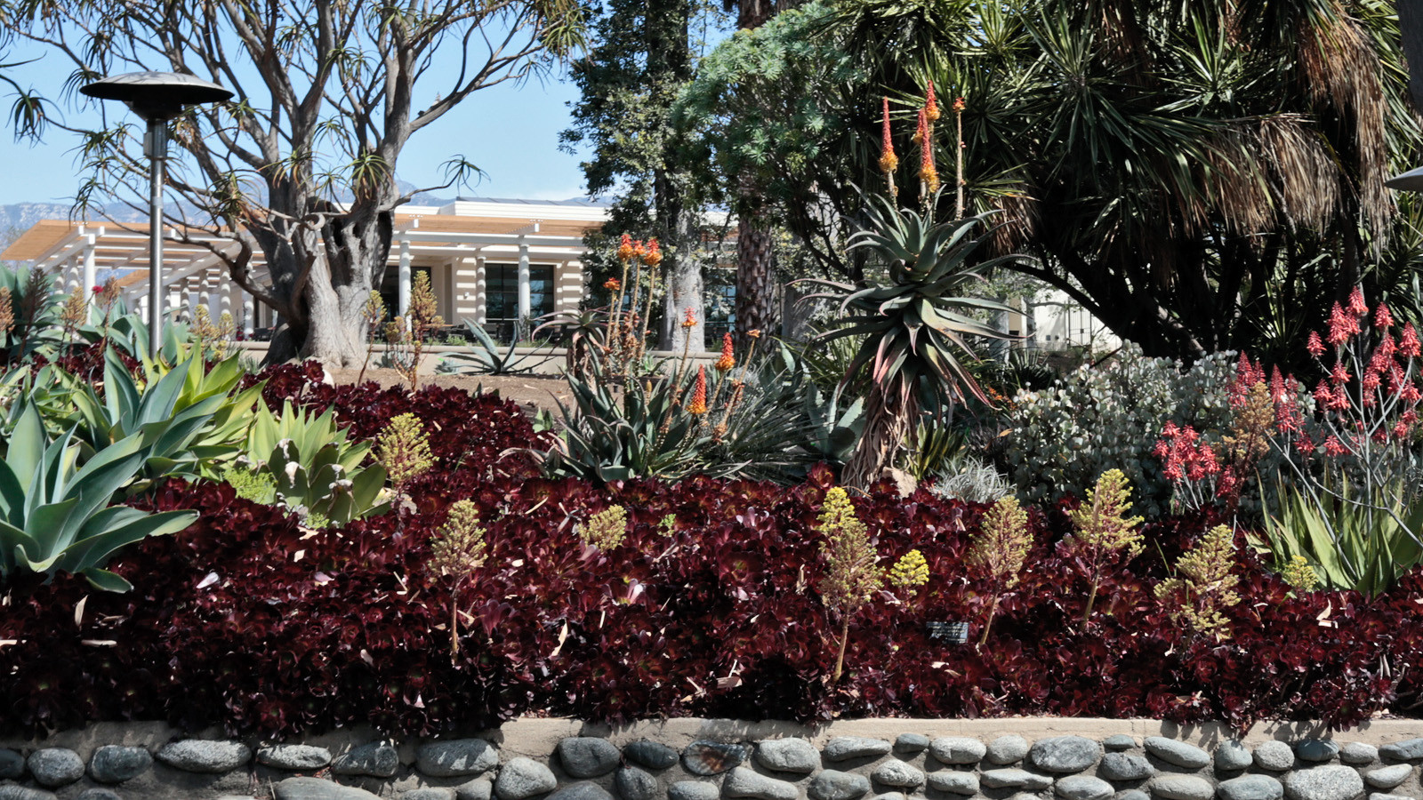 Library art collections and botanical gardens on saturday will open
