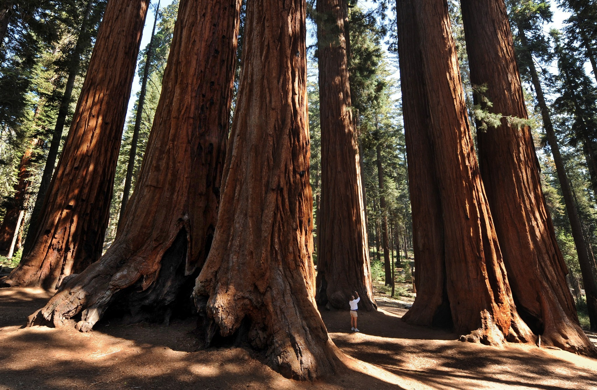 sequoia national park Travel the world better expedia price guarantee on 47 sequoia national park hotels saves you money real user reviews on over 321,000 hotels worldwide no expedia cancellation fee.