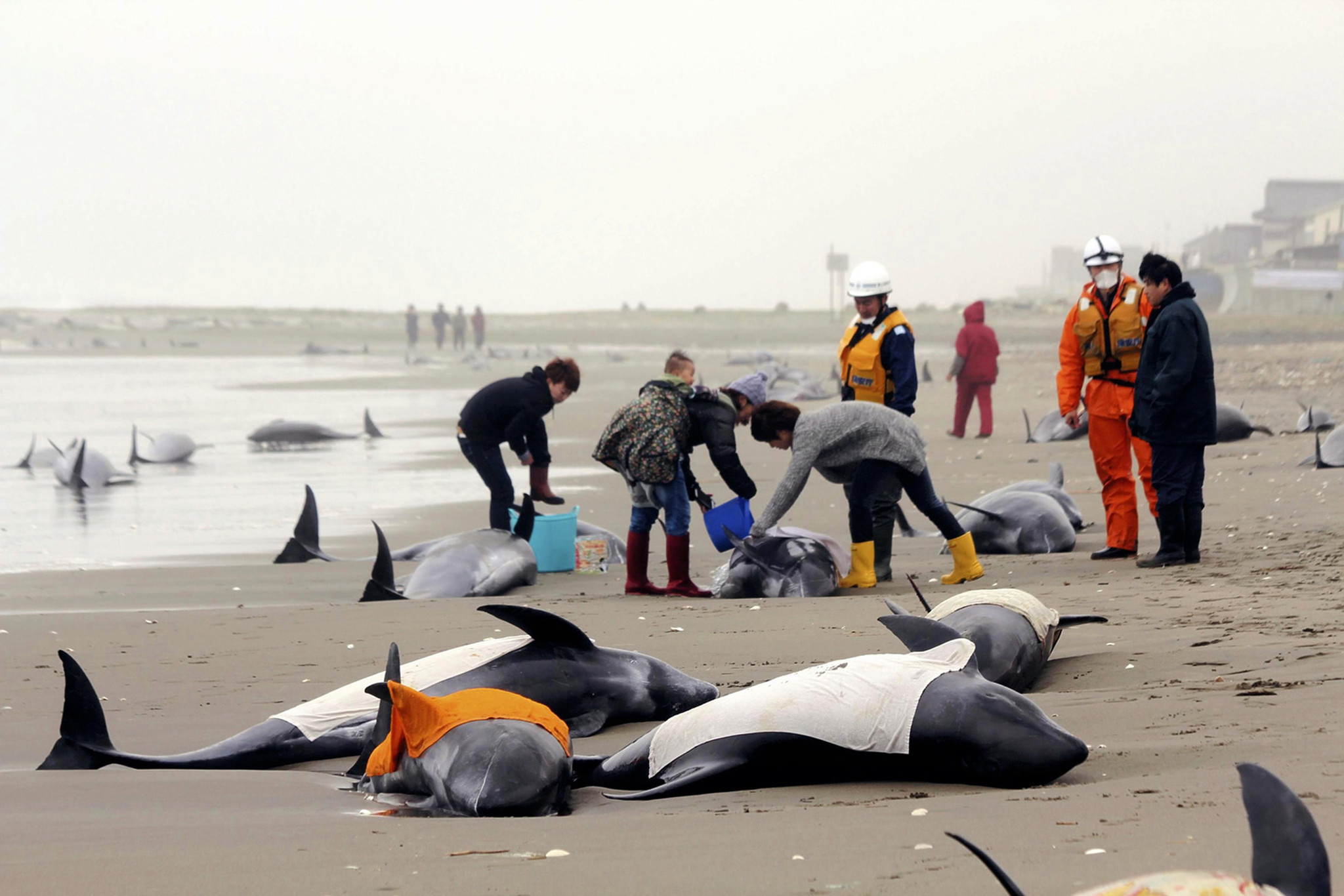Beached dolphins - photo#15