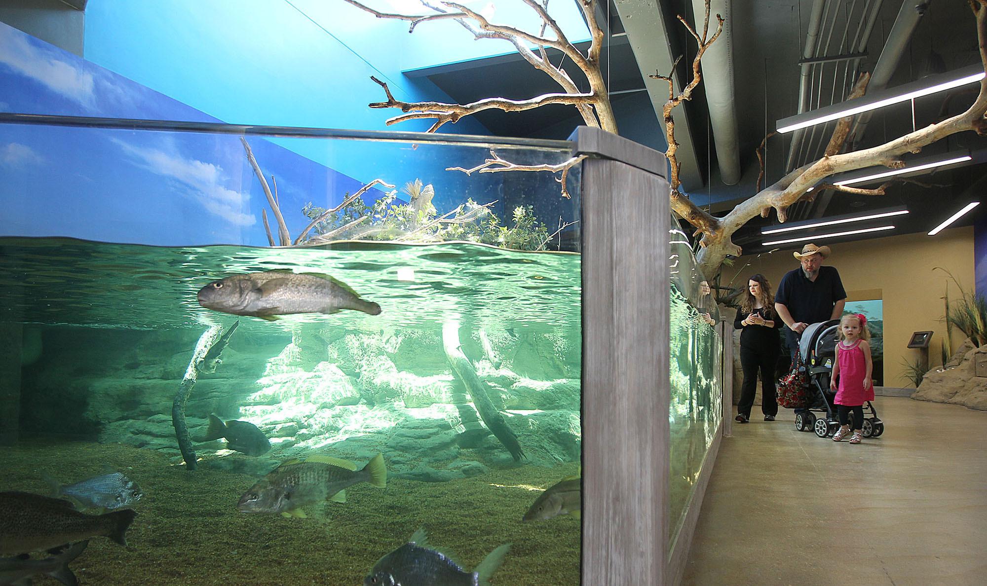 Texas Aquarium Accidentally Kills Nearly All Fish In Its