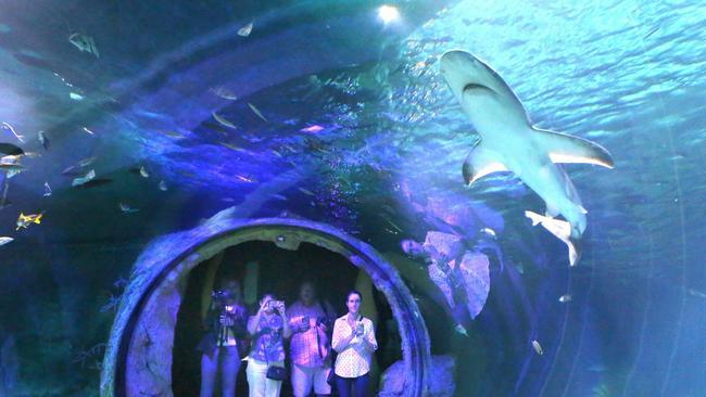 Image Gallery Orlando Aquarium