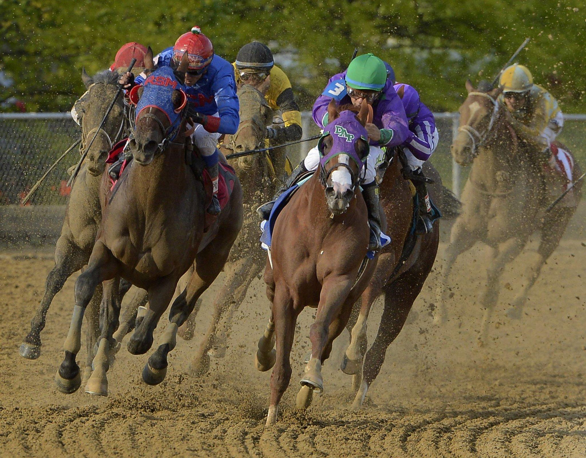 Horse Racing Tips | Betrescue