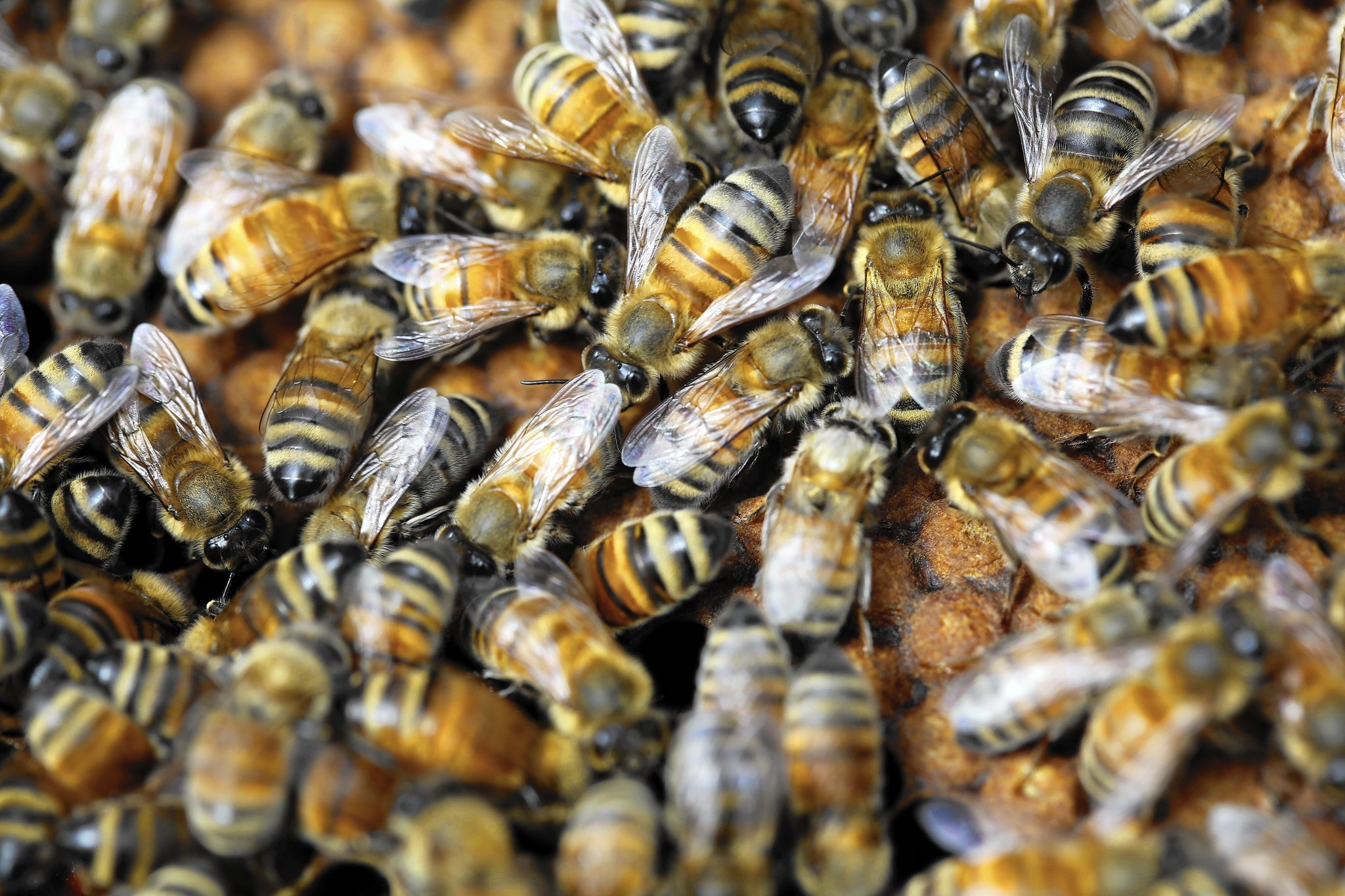 Unprecedented scientific report says decline of pollinators a threat to food security