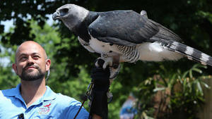 Flights of fancy: New bird show at Brookfield Zoo and other summer events