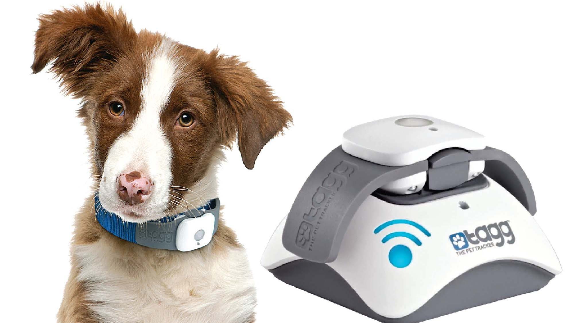 Gadgets to keep an eye on your dog — and your dog's walker