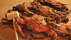 Event info: Chesapeake Crab & Beer Festival at Rash Field
