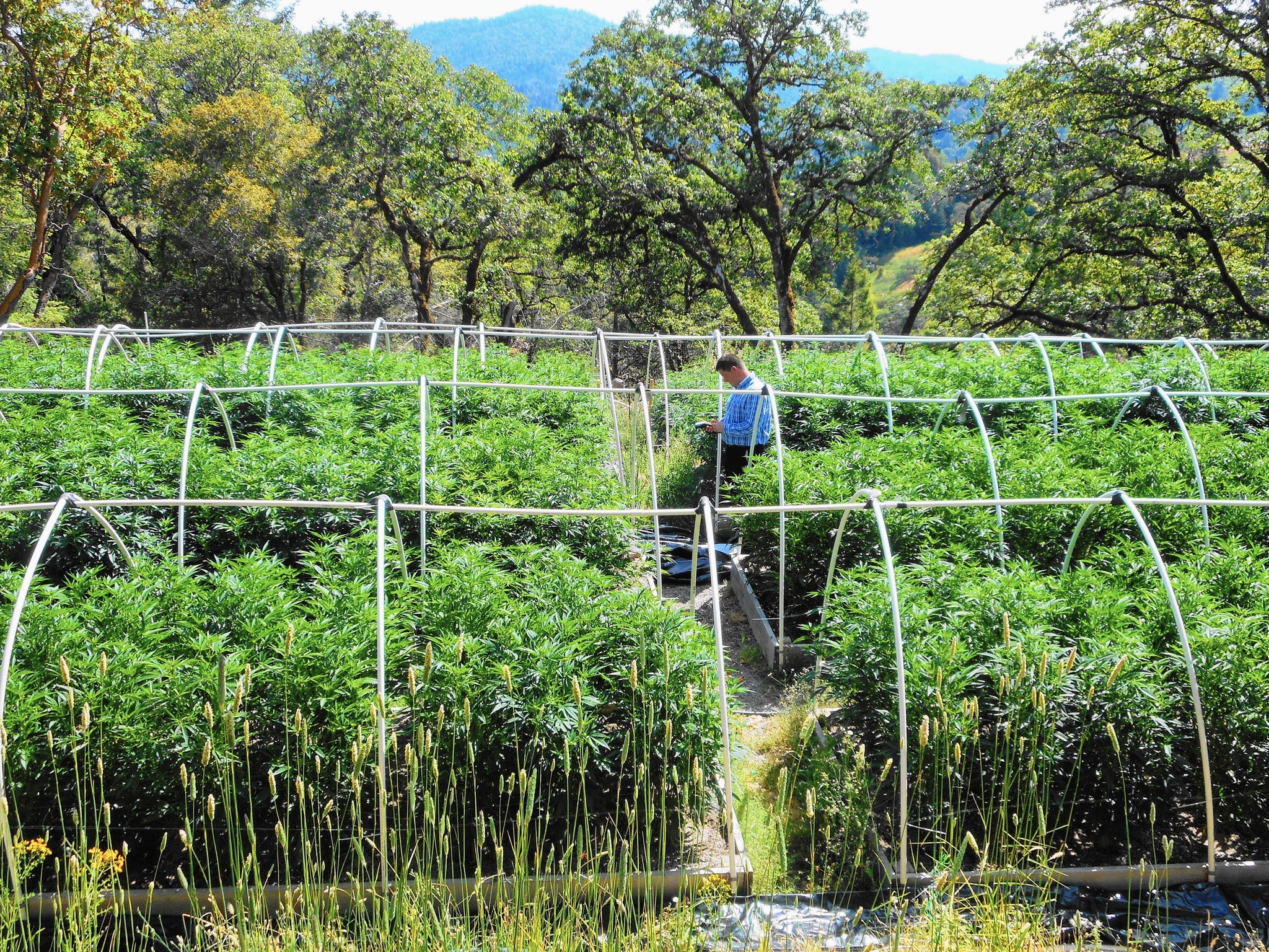 Civil engineer Praj White assesses a site in Humboldt County's Eel River watershed that is home to a marijuana farm. (Humboldt County)