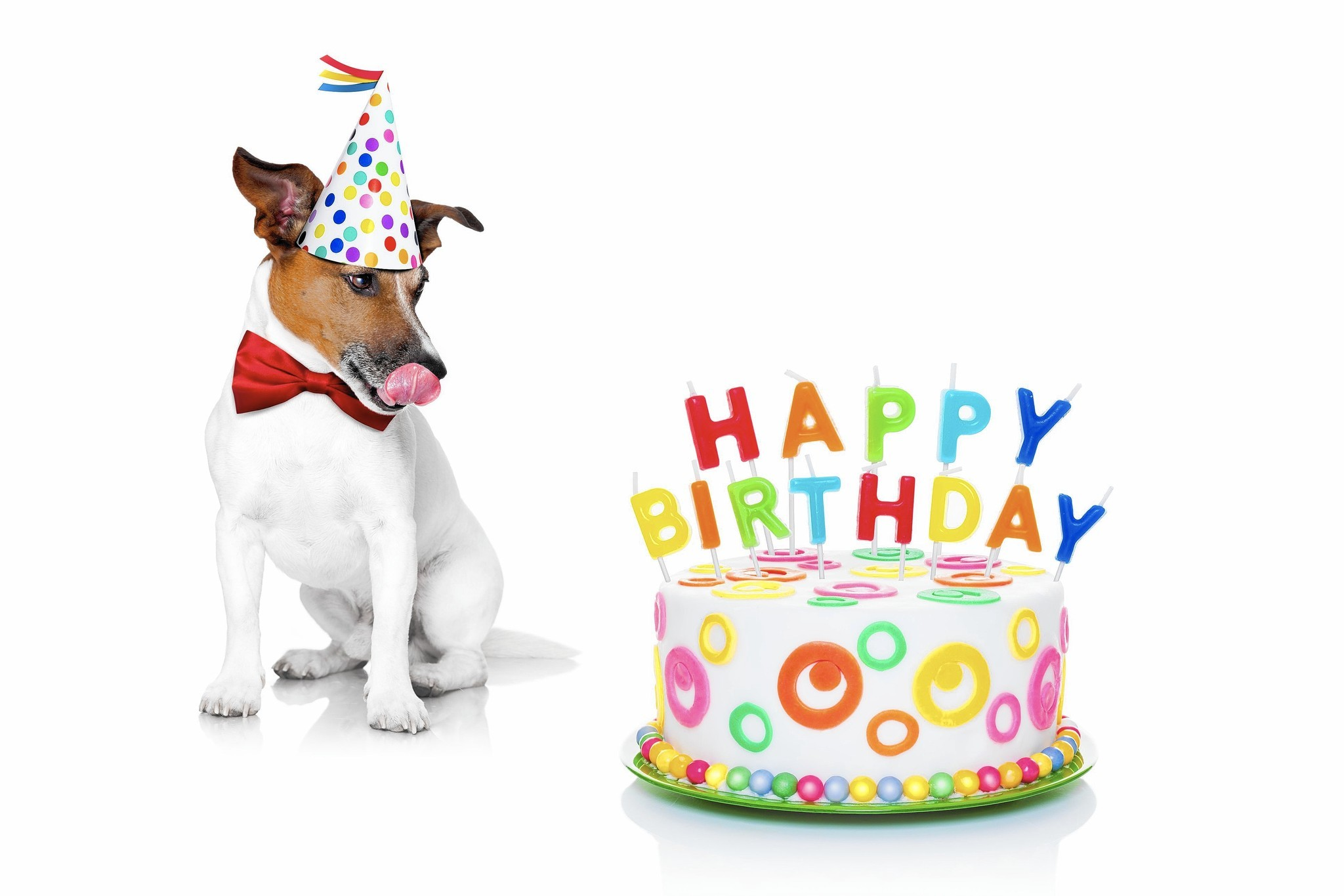 Dog party planning Throwing a birthday bash for Fido and his furry