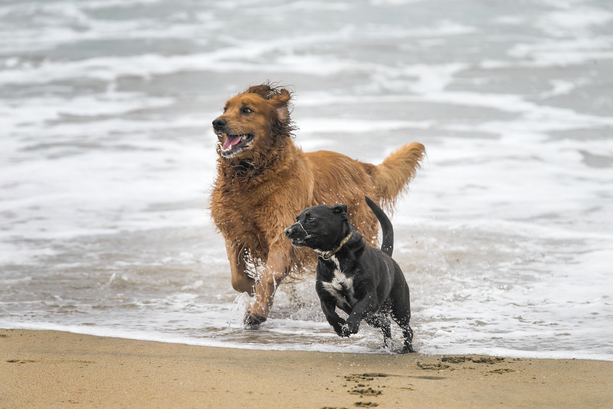 Dog Parks And Dog Beaches In Southern California LA Times - Map of chicago dog parks