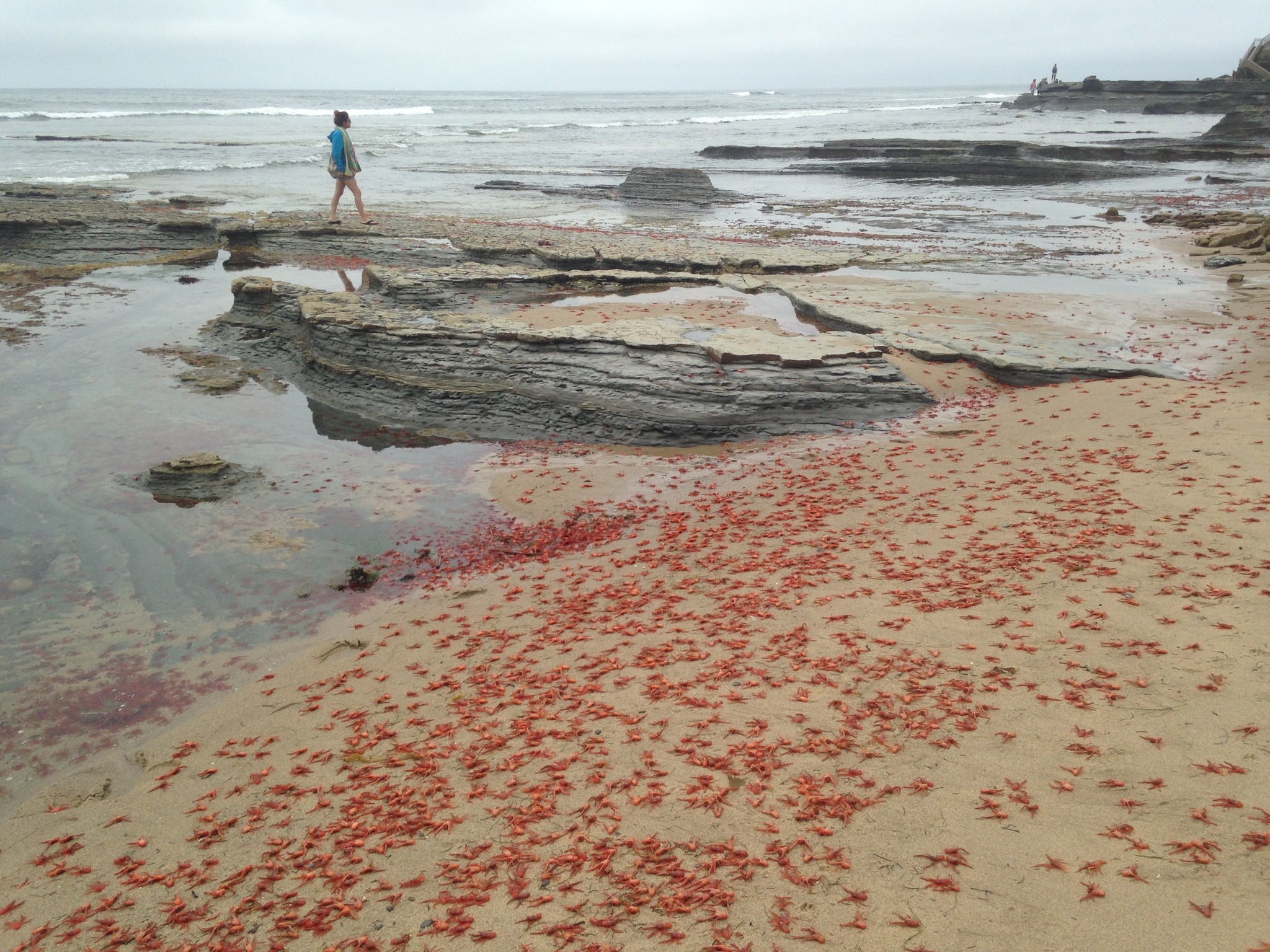 Video what does the red tide at san diego 39 s sunset cliffs for Tides for fishing san diego