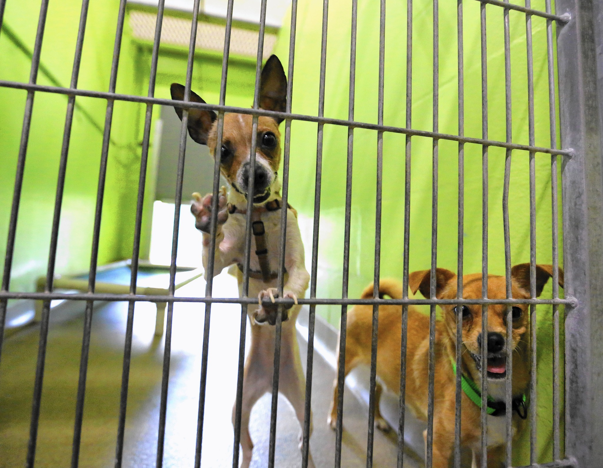 Adopted Dogs In Orlando
