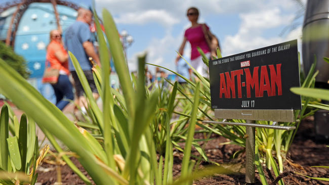 Downtown Disney Tiny Ant-Man Movie Signs