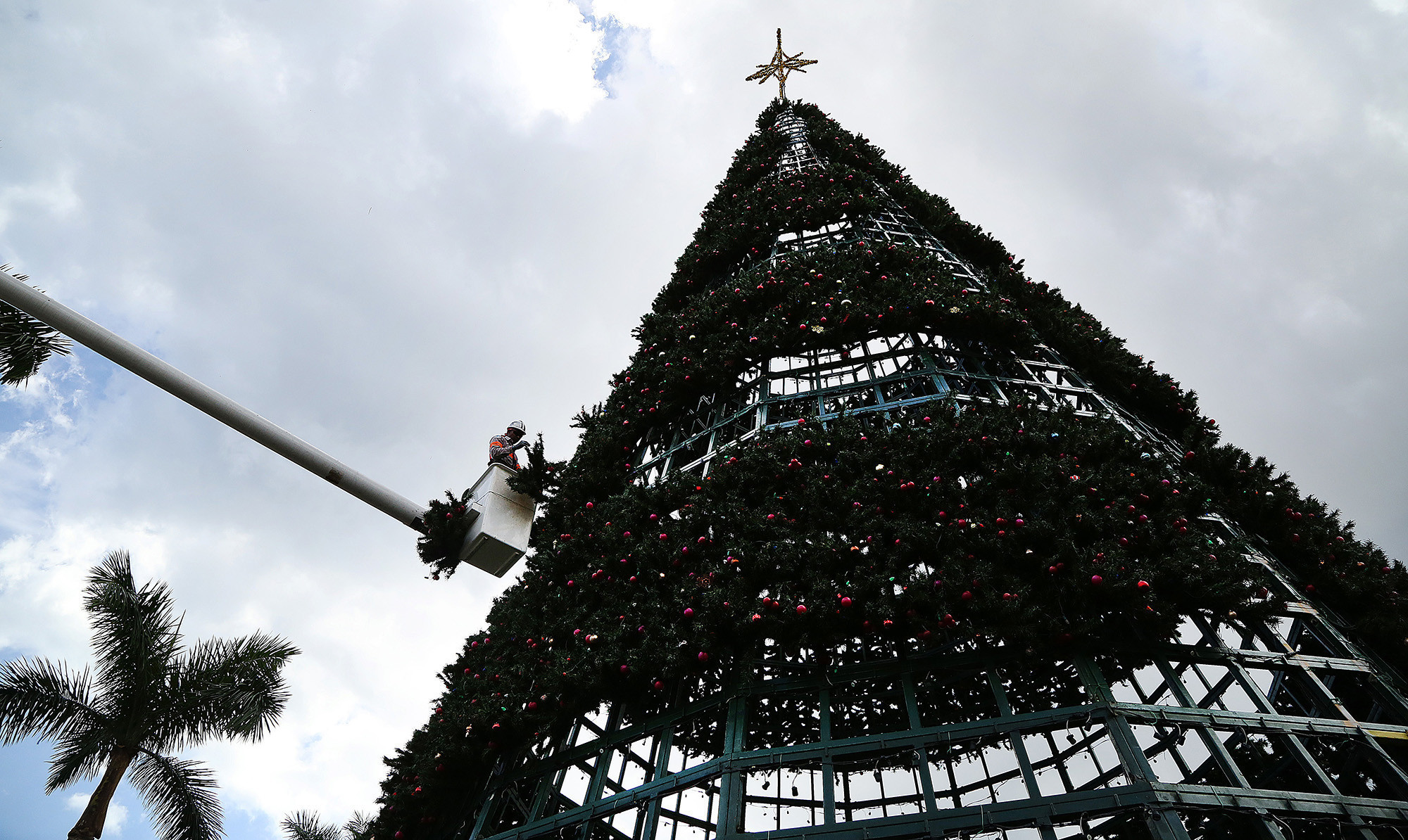 delray to keep citys current 100 foot christmas tree sun sentinel - 20 Ft Christmas Tree