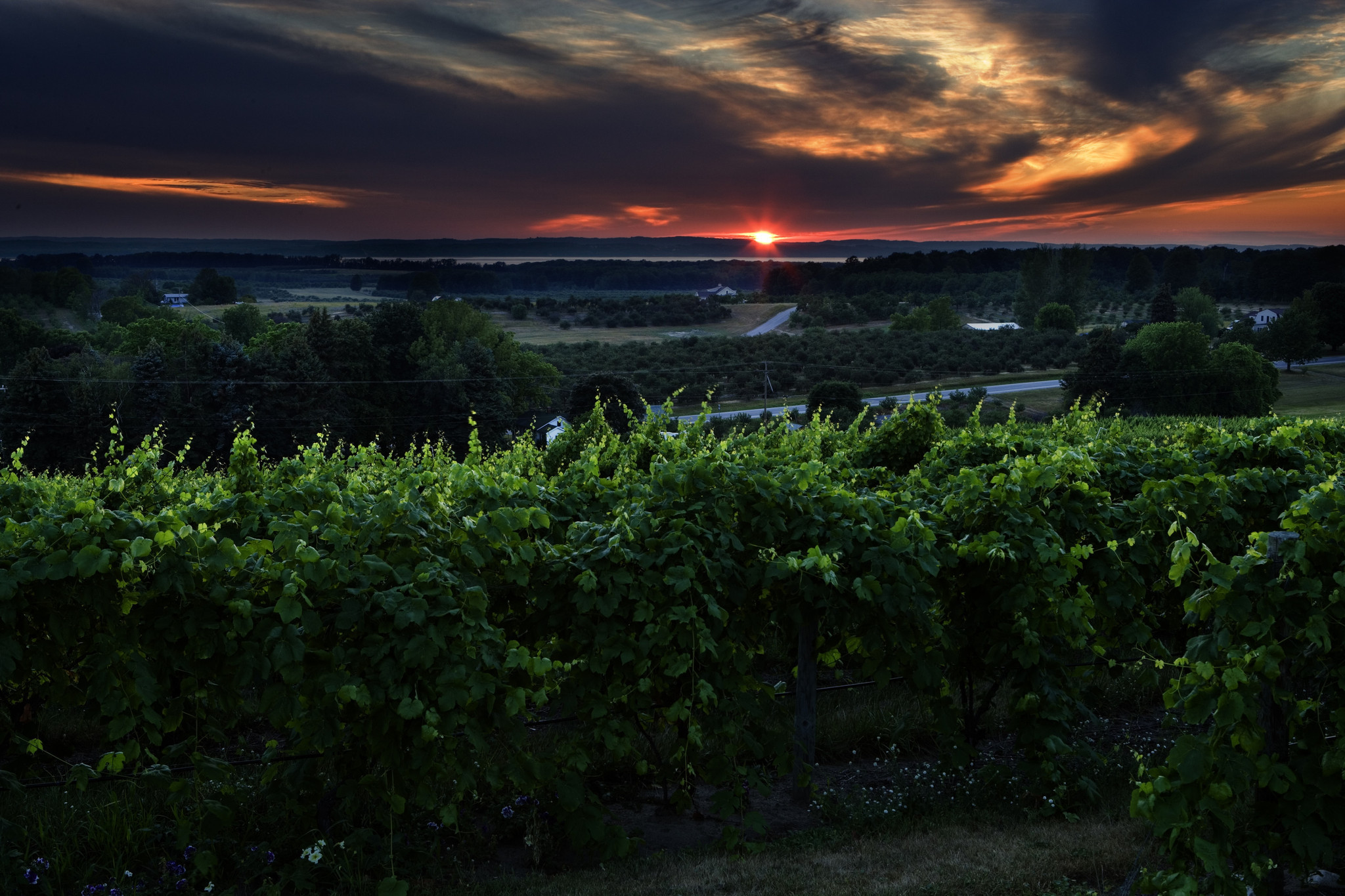 Traverse City, Mich., vineyard
