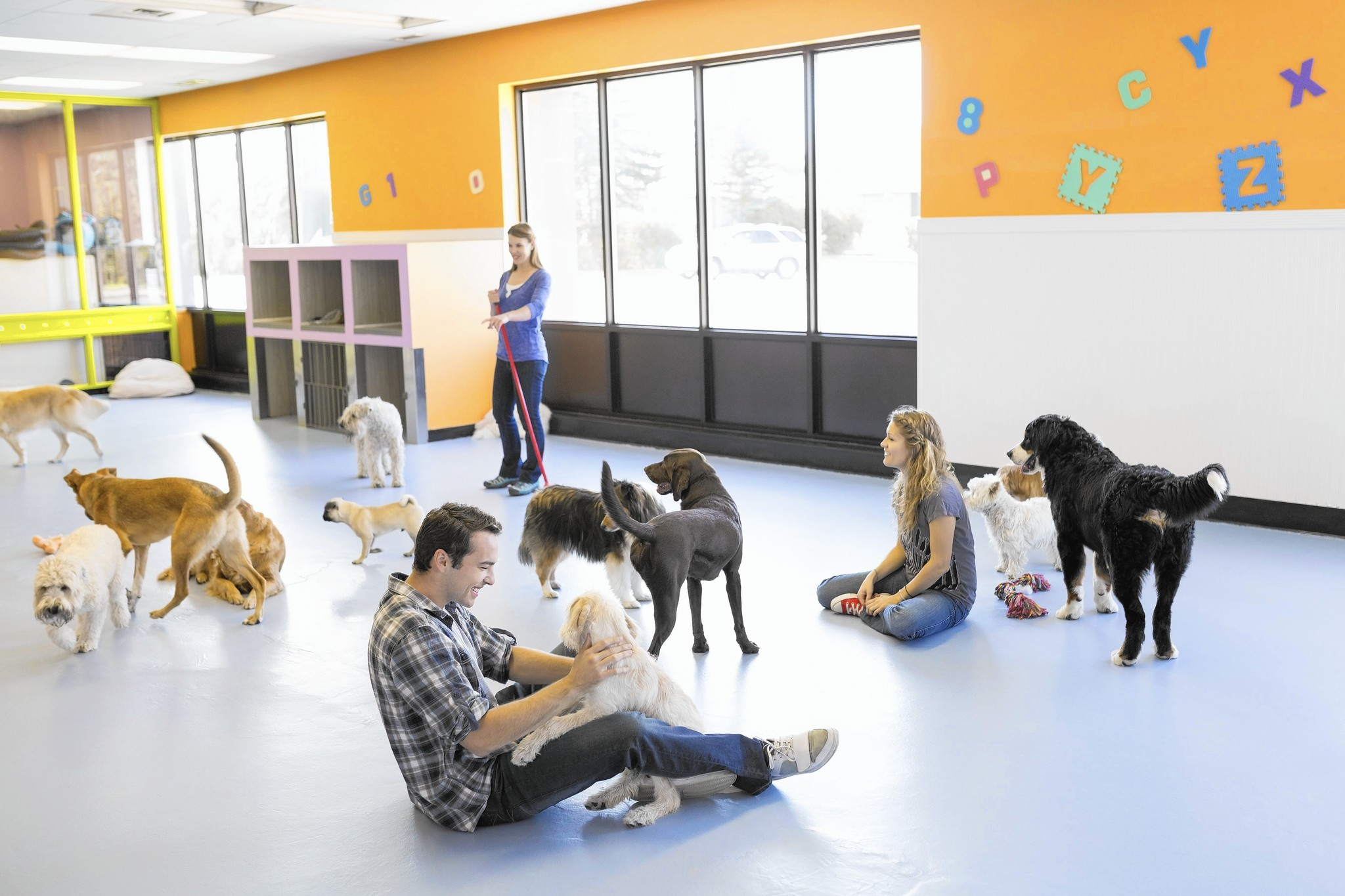 dog day care how to find the best fit for your pup