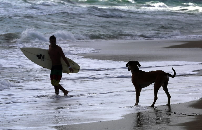 Dogs Beach in Florida Propose Dog Beach to City