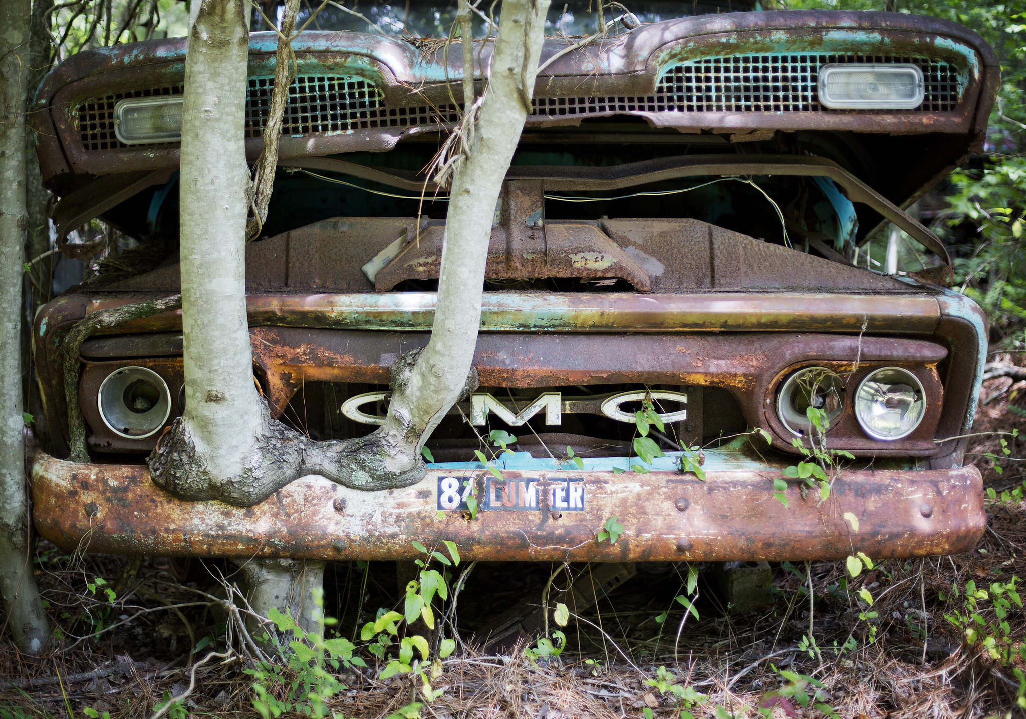 World's largest classic car junkyard takes root in U.S. forest