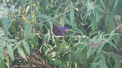 Williamsburg Botanical Garden's Butterfly Festival delights visitors