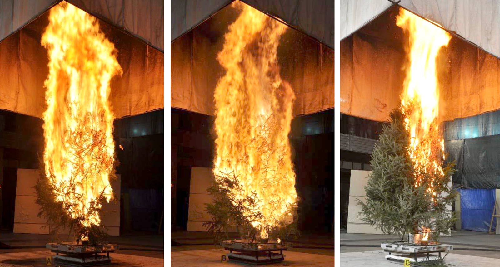 atf test burn of different christmas trees capital gazette - Different Christmas Trees