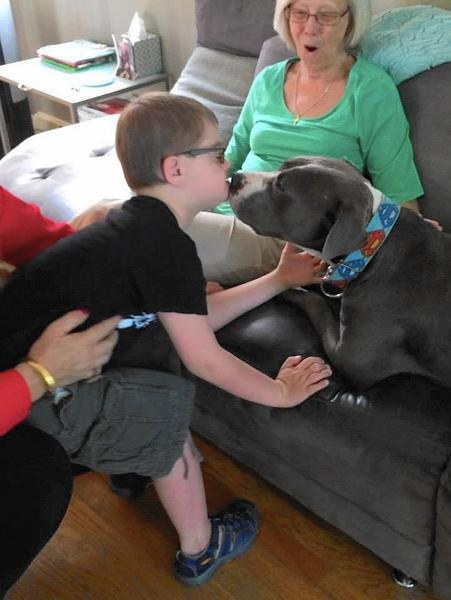 found near death in grant park a loner pit bull has a new best friend chicago tribune. Black Bedroom Furniture Sets. Home Design Ideas