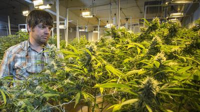 Maryland native dubbed 'marijuana mogul' in Colorado