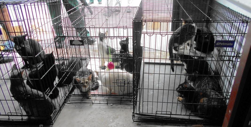 23 cats found in u0027deplorableu0027 condition inside Merritt Island storage facility - Orlando Sentinel & 23 cats found in u0027deplorableu0027 condition inside Merritt Island ...