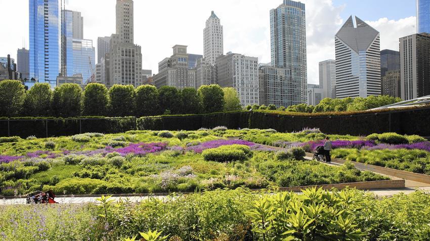 Lurie Gardens at Millennium Park