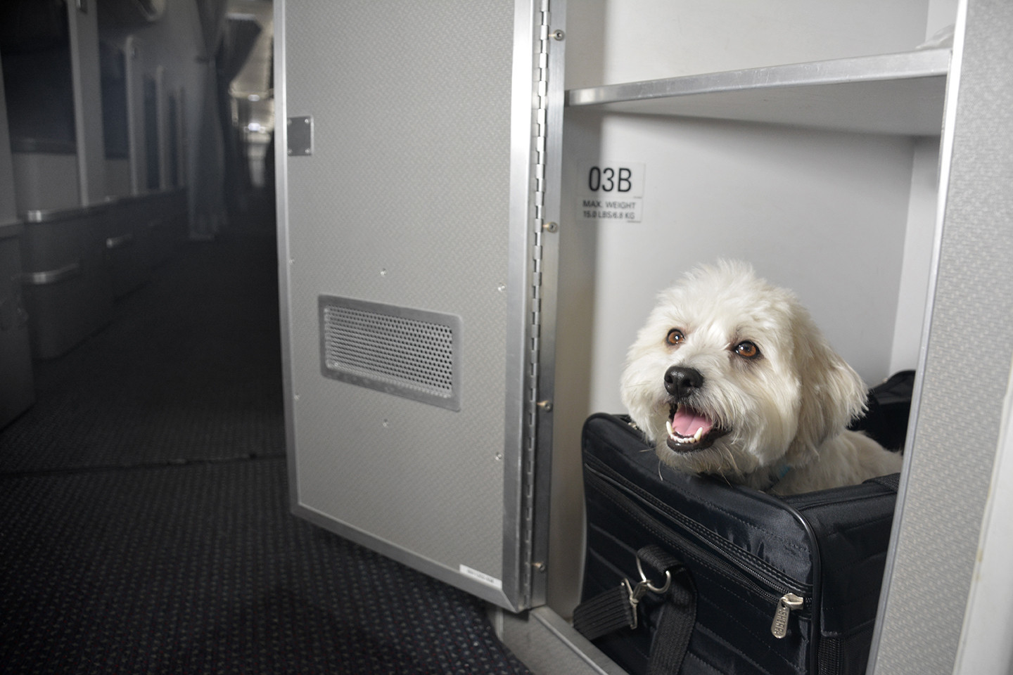 Can A Dog Fly On American Airlines