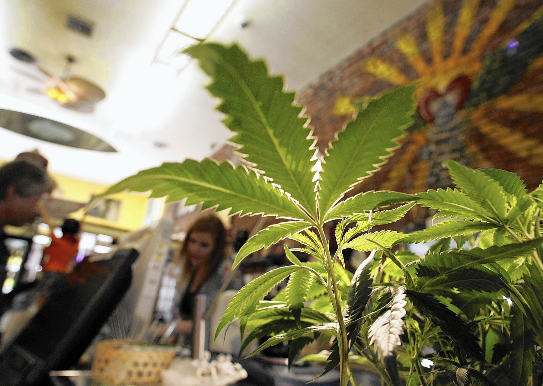 Why medical marijuana can still get you fired in Illinois - Chicago ...