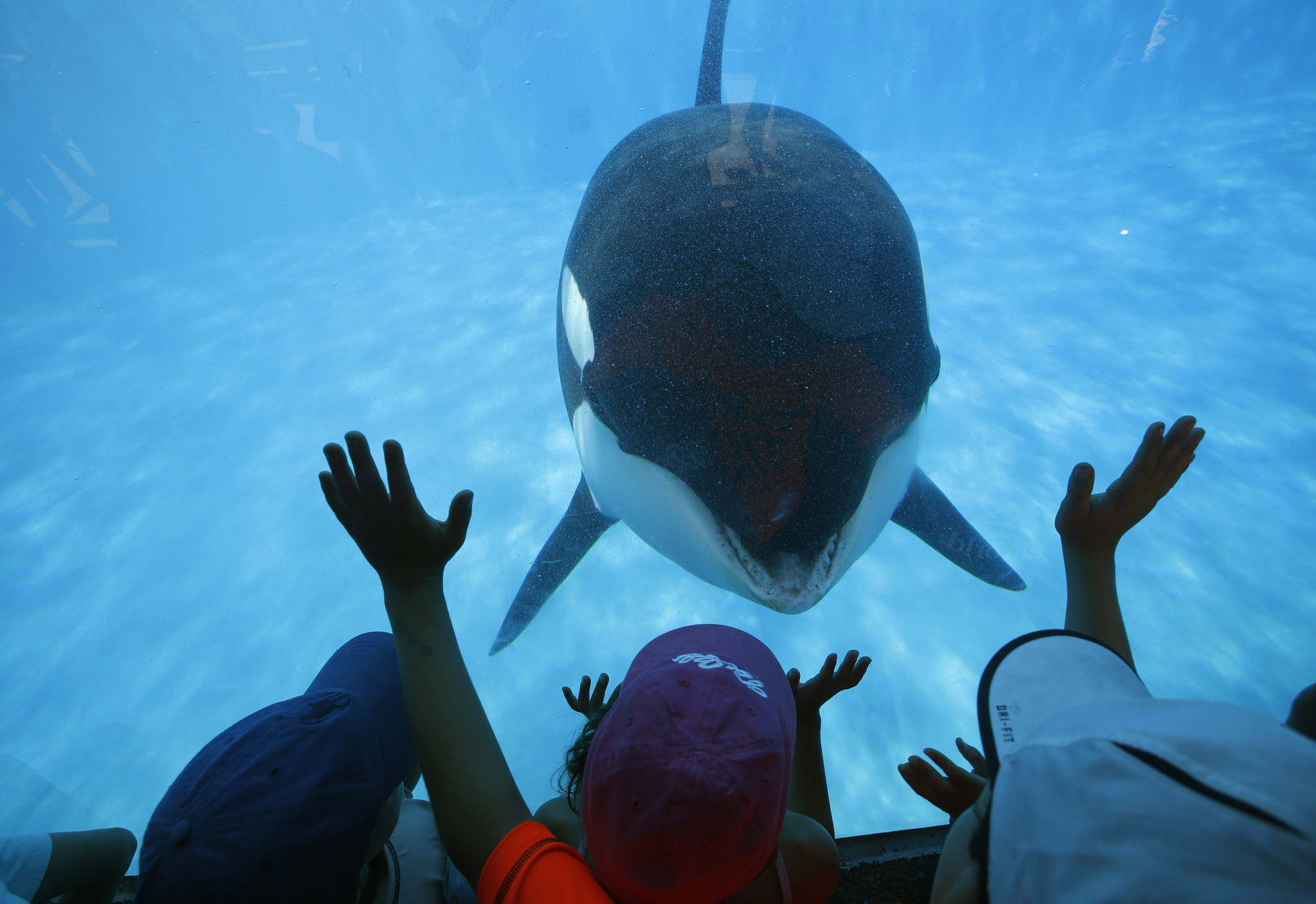 deal how you can score free kids tickets to seaworld san diego