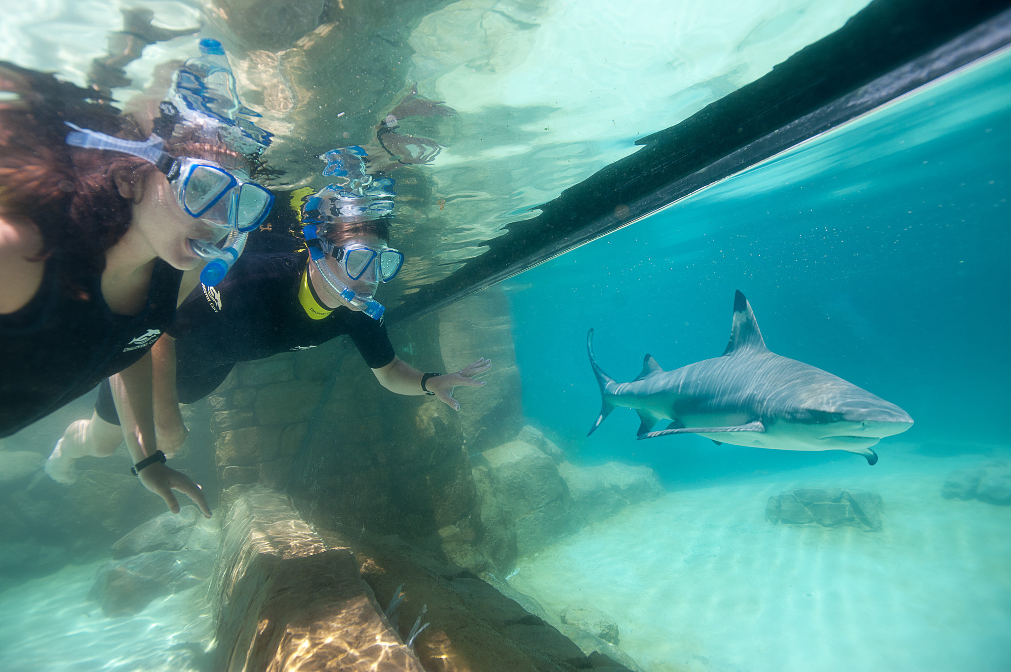 discovery cove discount tickets set for florida residents