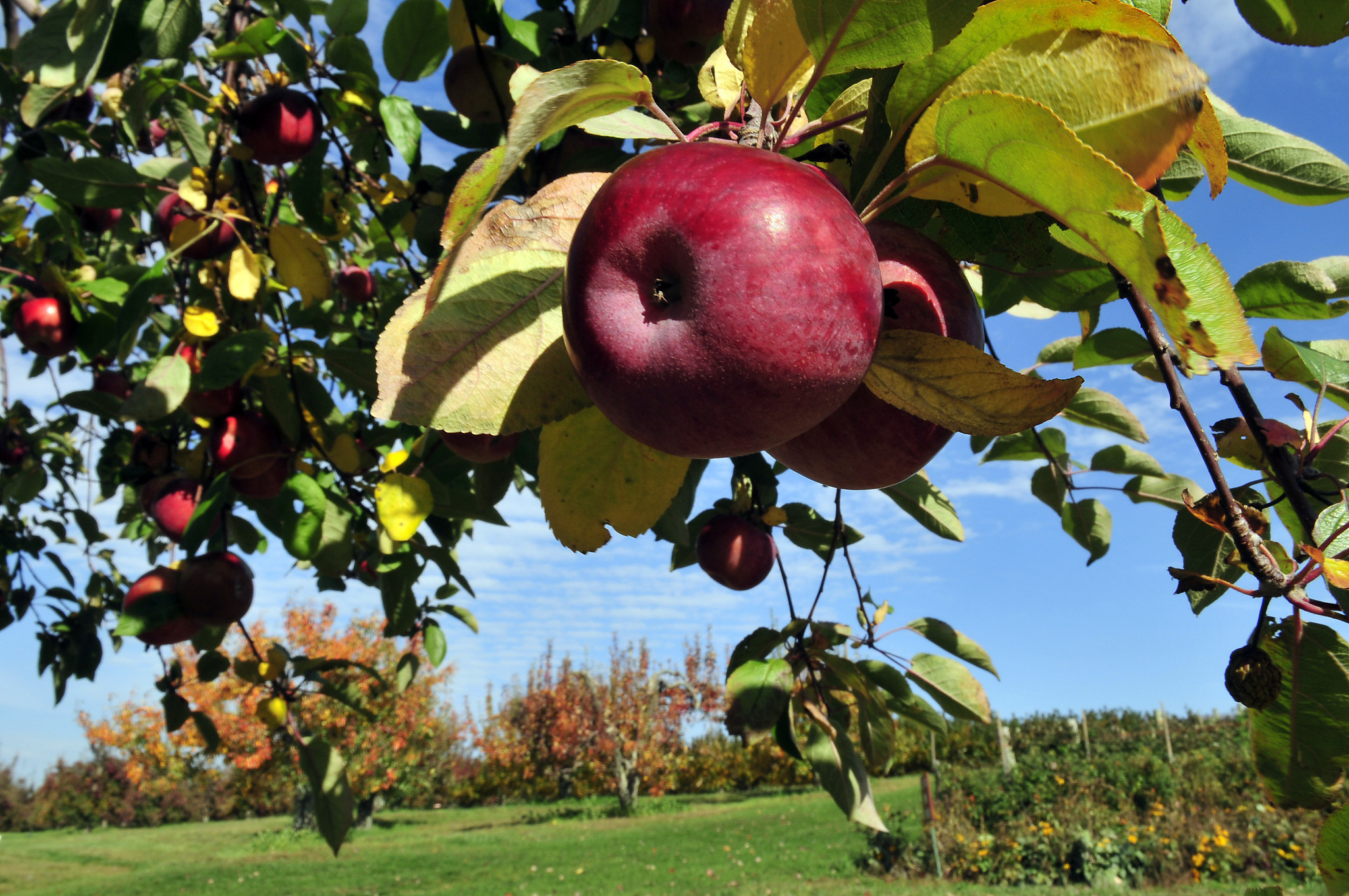 Pick-Your-Own Farms In Connecticut - CT Now