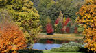 Time to think fall foliage