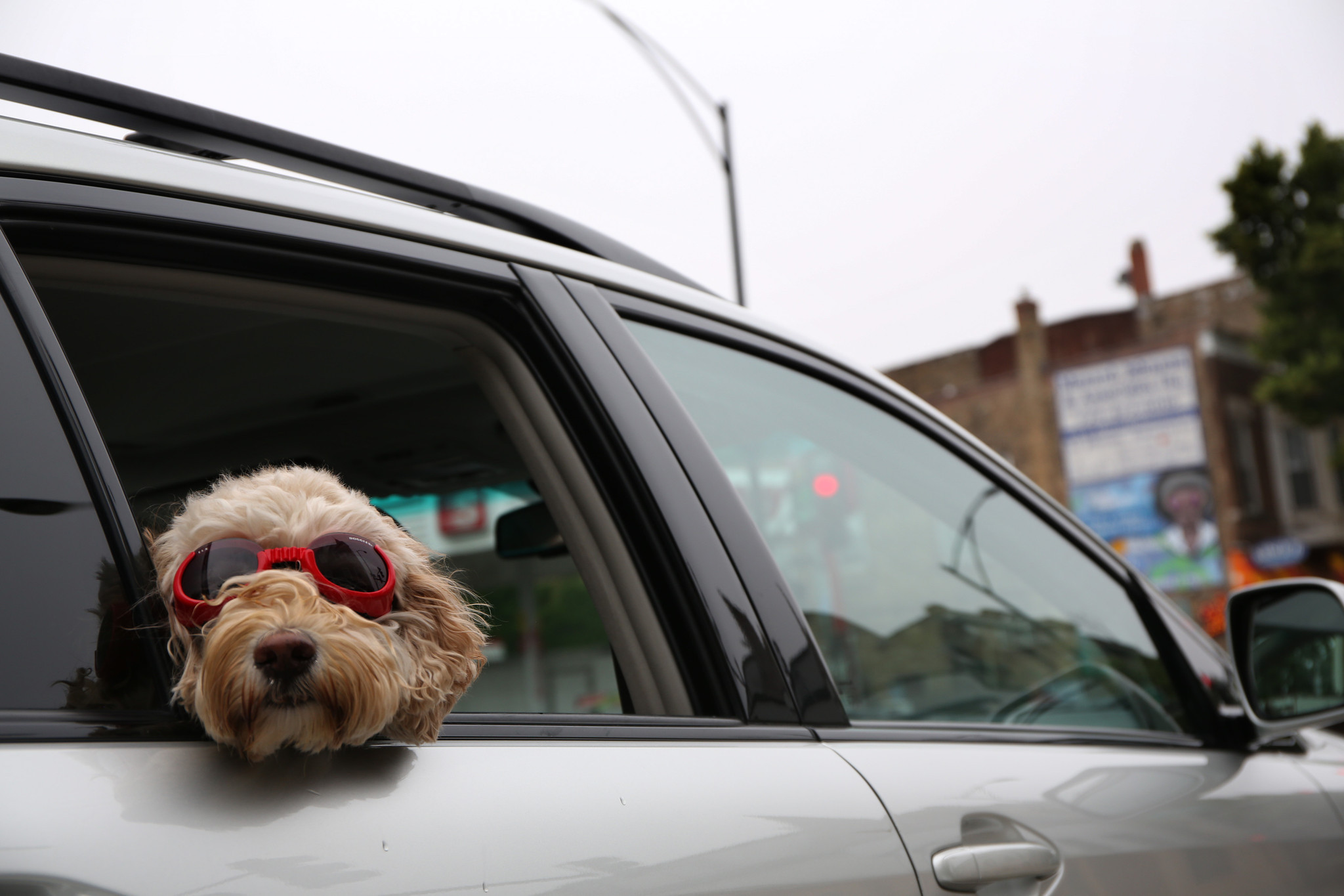 Best new cars for dog owners according to autotrader chicago tribune