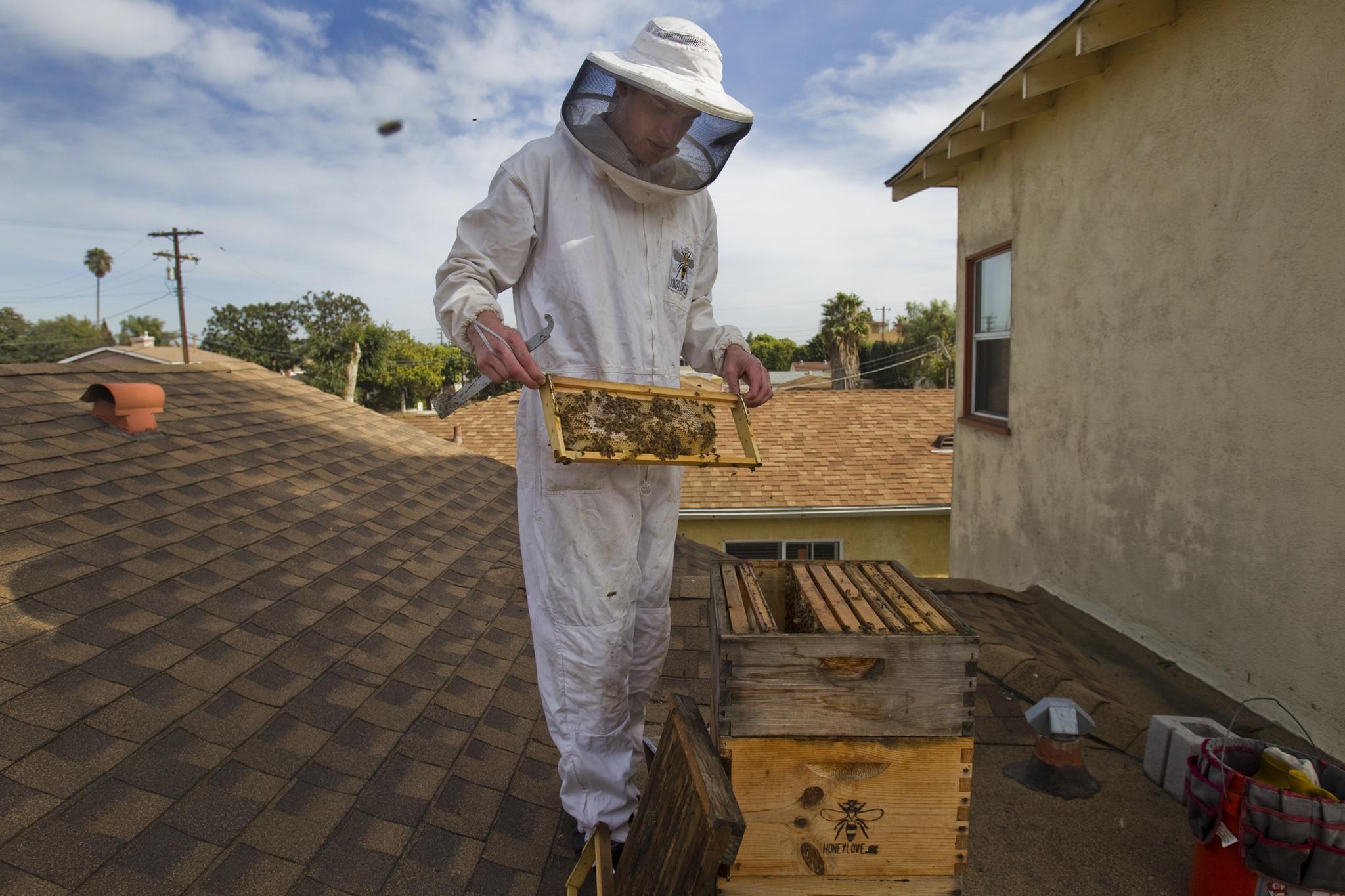 l a city hall buzz backyard beekeeping should be legalized la