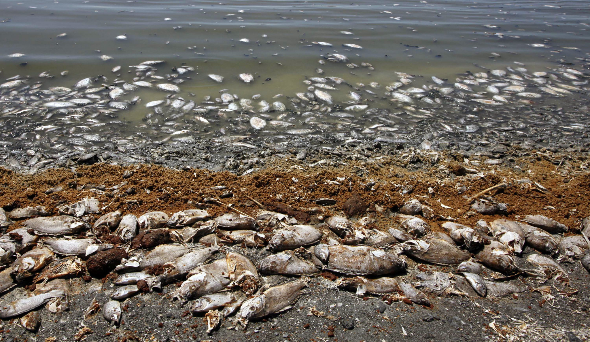 Watchdog panel calls for immediate action to avoid for Salton sea fishing report