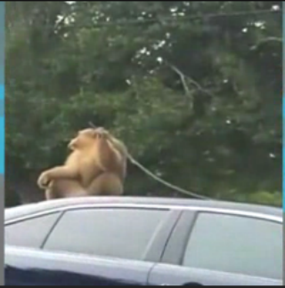 Cops: Monkey on the lam pulled molding off police cruiser