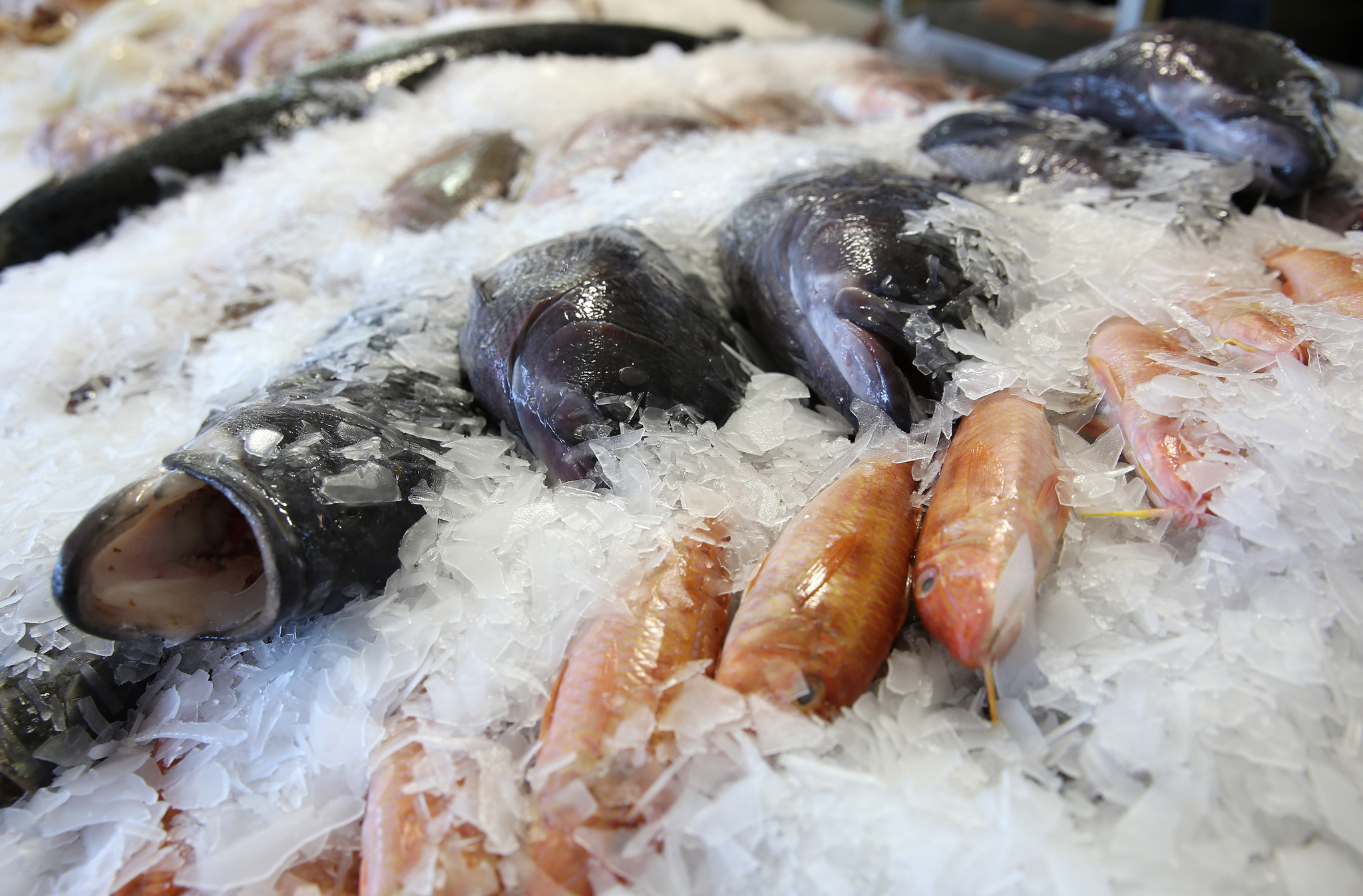What americans do with fish is shocking chicago tribune for Boston fish market chicago