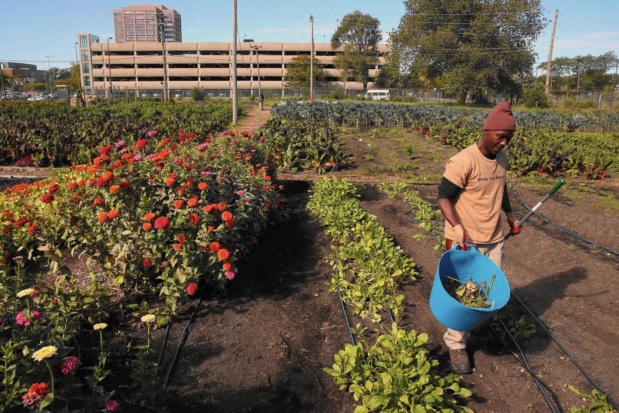 Growing Chicago: A flourishing city in a garden