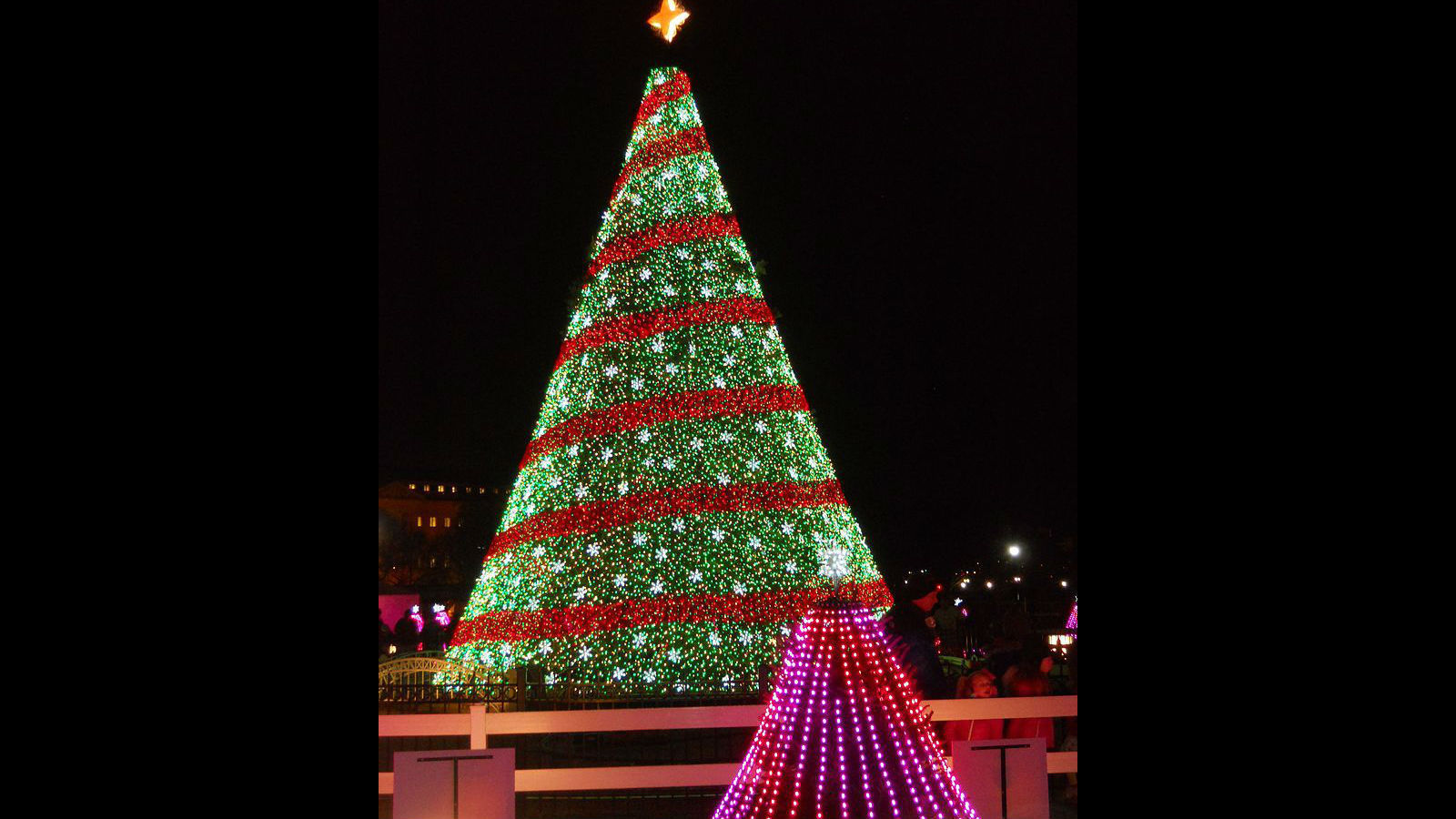 national christmas tree 5 things youll want to know besides how to get tickets to its lighting la times - Christmas Tree Lights