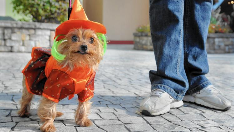 Have a doggone safe Halloween
