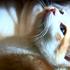 Scottish cat study kill