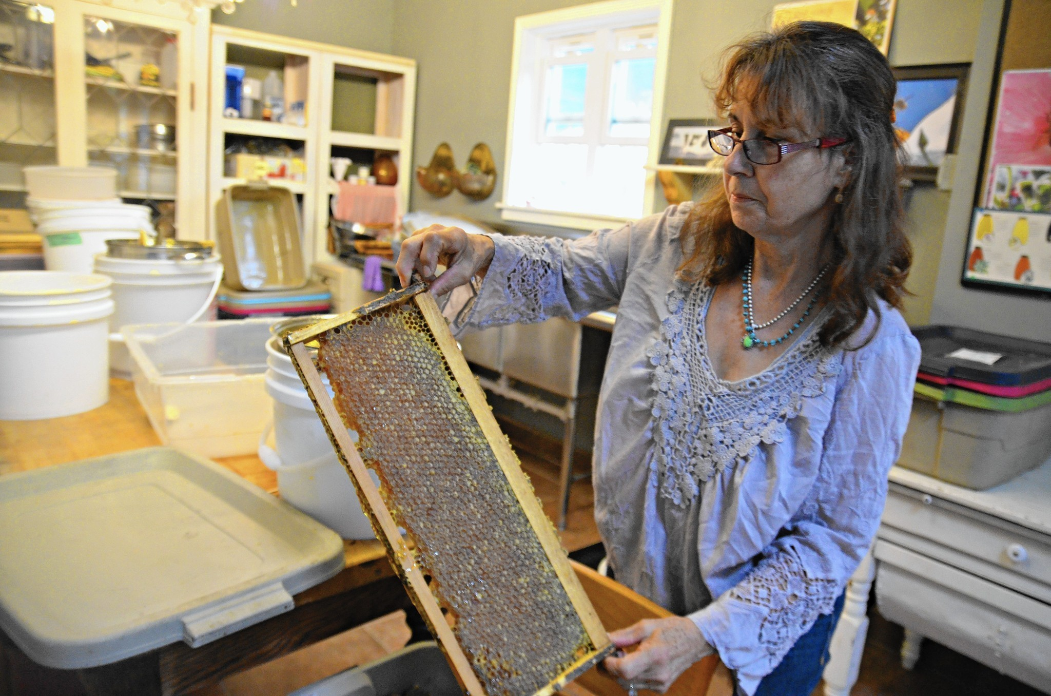 backyard bees rescues hives and reaps a business weekend