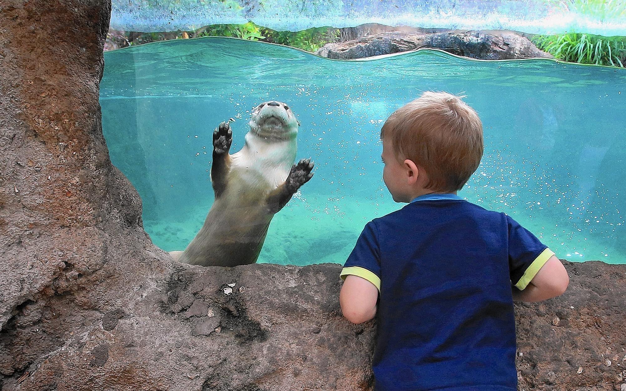 Photos Central Florida Zoo Orlando Sentinel