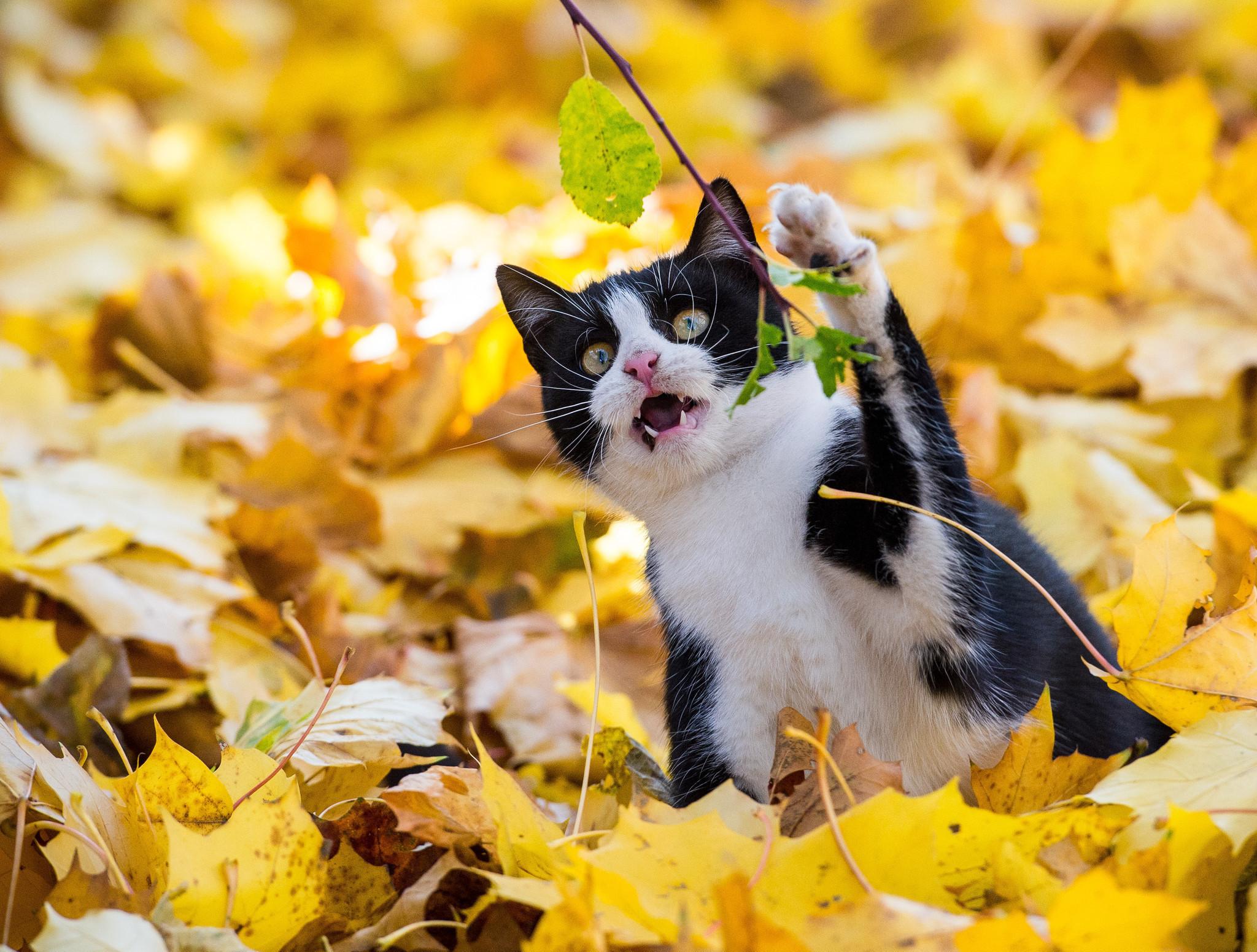 Scottish cat study article