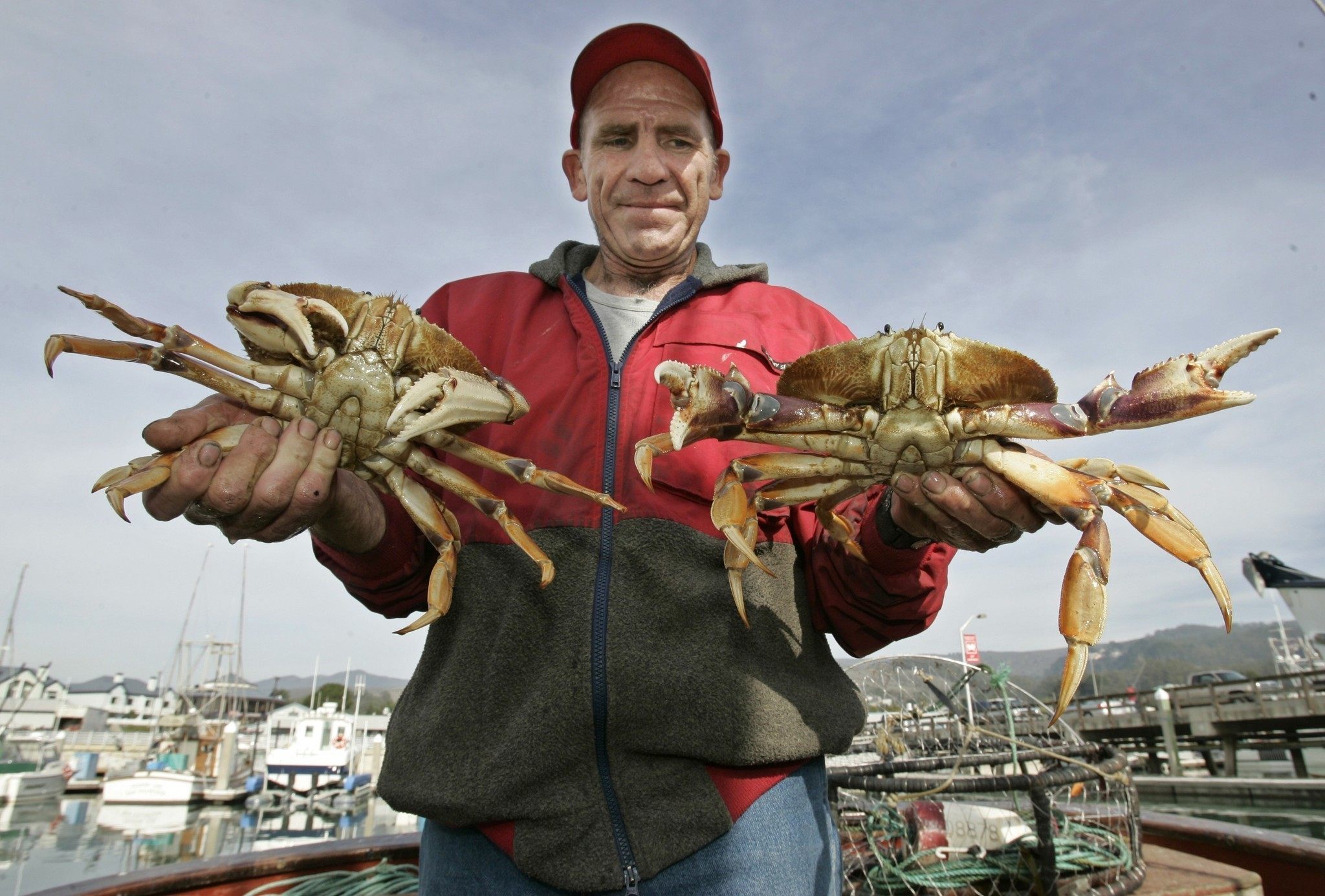 Toxic algae delays california 39 s dungeness crab season la for Crab fishing game