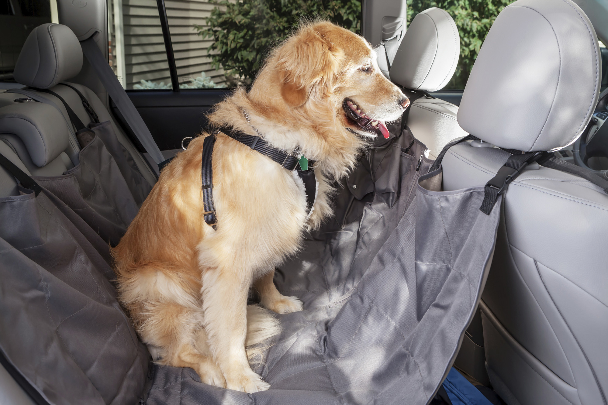 How Safe Are Pet Car Harnesses And Crates Howard County