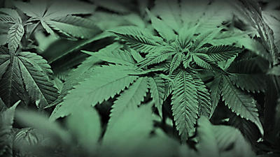 27 terms banned for medical-marijuana businesses in Altamonte
